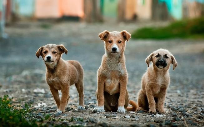 Aprovado Projeto que prevê controle populacional de animais