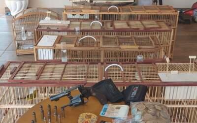 Polícia Civil apreende 35 aves silvestres em Itatiaiuçu